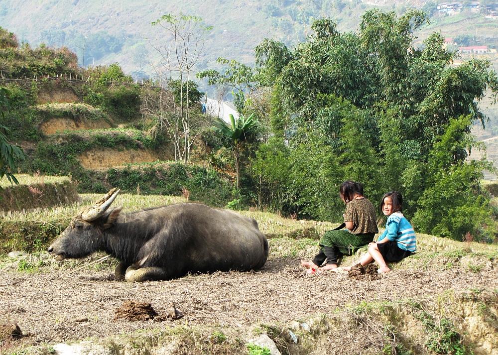 Meisjes en koe in Sapa Hoogtepunten van noord Vietnam