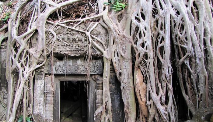 Tah Prohm, Angkor Cambodja