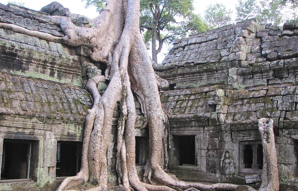 Ta Prohm Angkor Cambodja