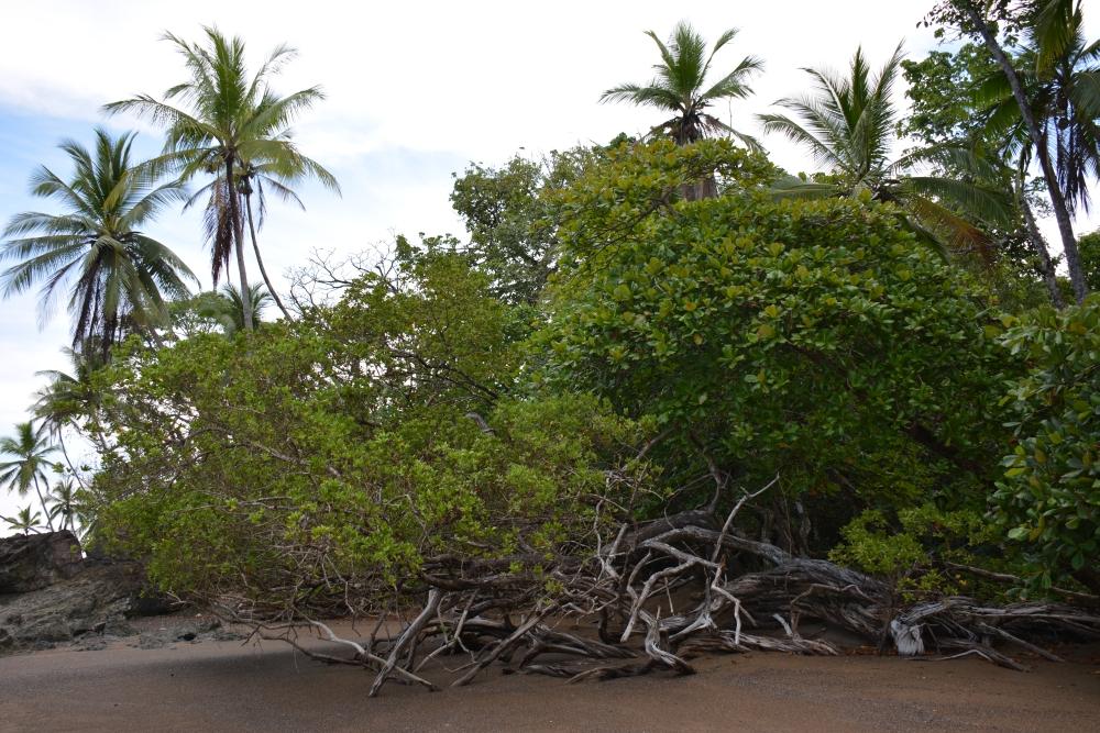 bijzondere kustwandelingen Osa Costa Rica