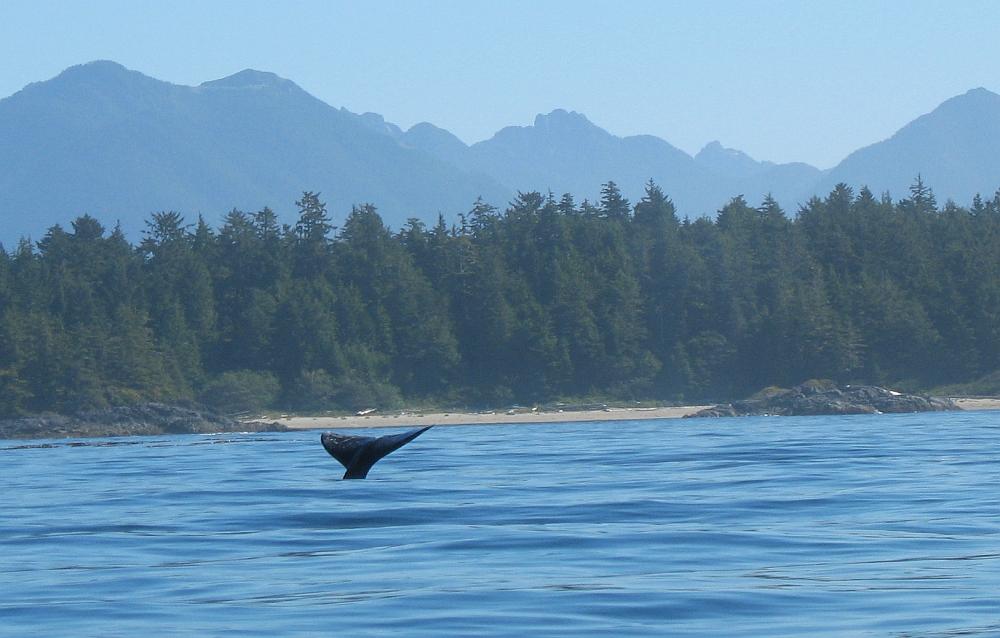 walvis Vancouver Island