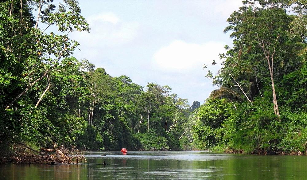 Kabalebo Amazone woud in Suriname