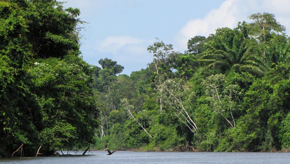 kabalebo Amazonegebied Suriname