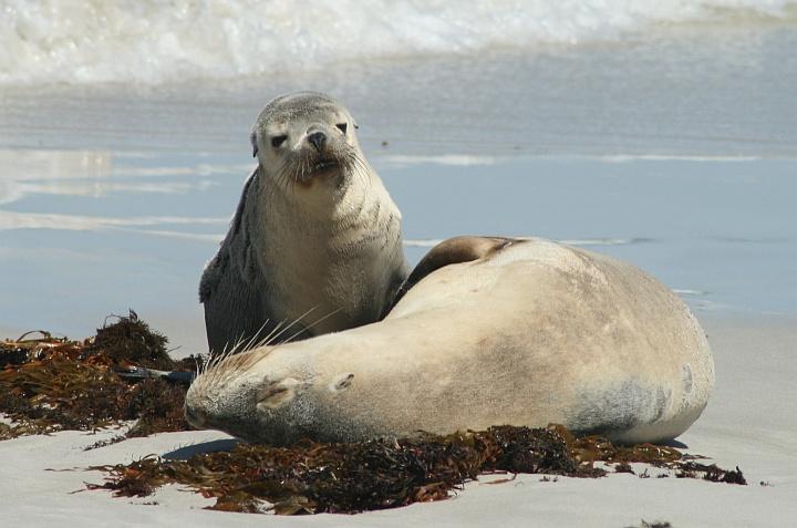 zeehond uitgelicht