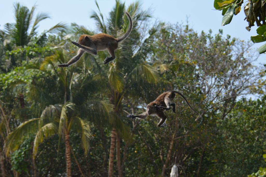 makaken op Ao Nag Beach Krabi