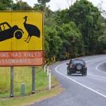 Mooiste routes in Australië, cassowaries at Mission Beach