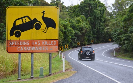 Mooiste routes in Australië, cassowaries at Mission Beach