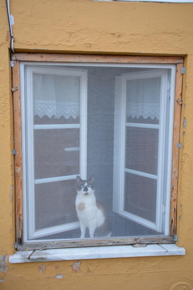 deuren en ramen45
