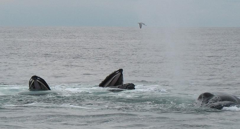 whalewatch1_1