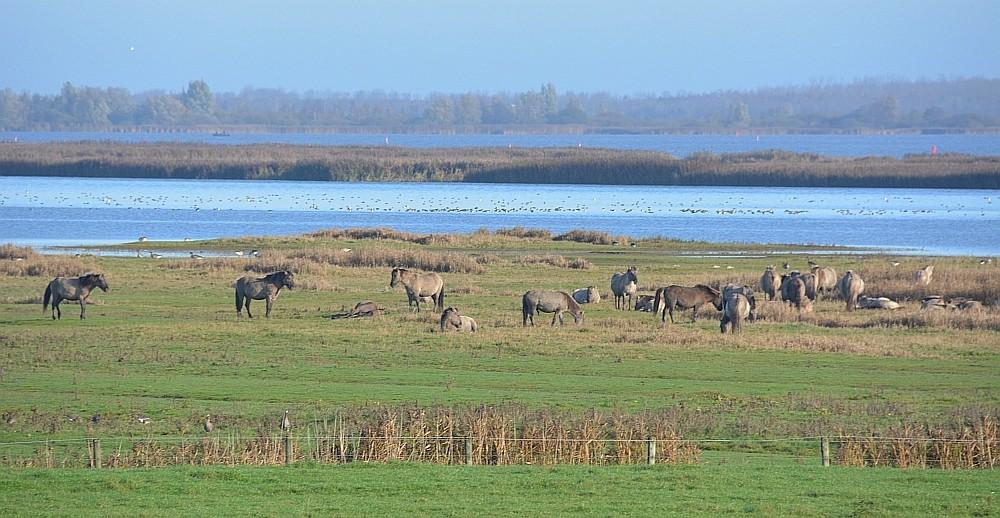 fietsen in Friesland Nationaal Park Lauwersmeer
