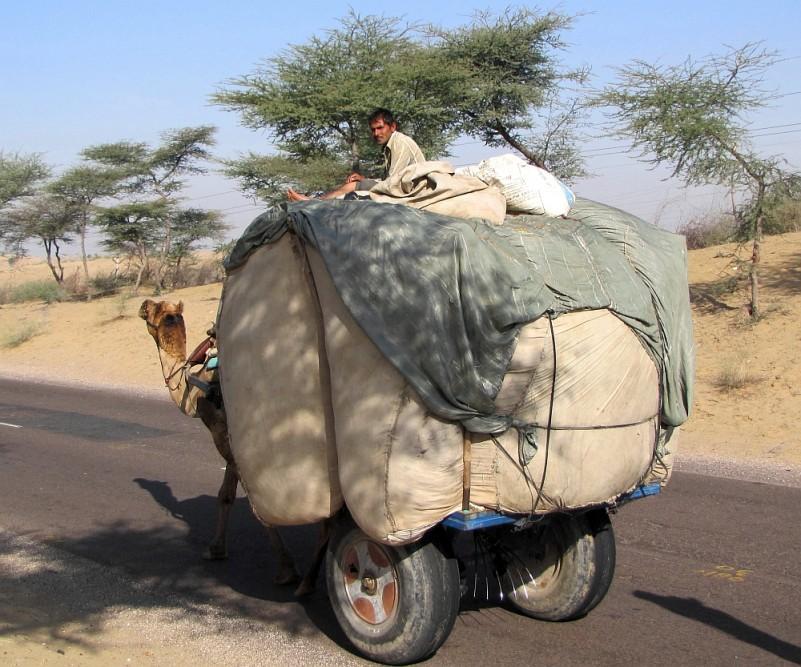 route door Rajasthan man met dromedaris kar bij Bikaner