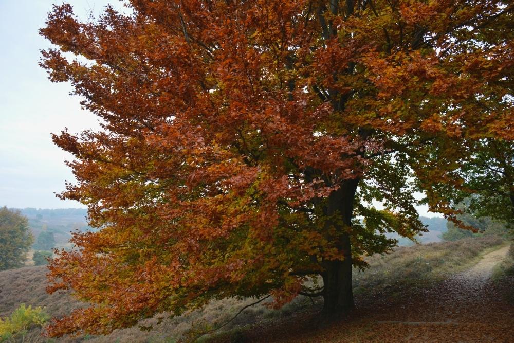 trage tocht Rheden, mooiste herfstwandelingen in Nederland
