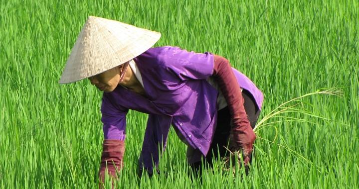 portraits of the world;  vietnam18