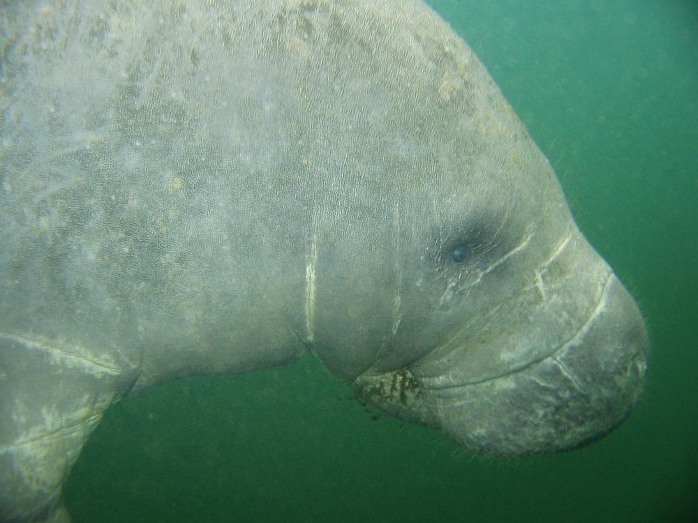 Vijf gave plekken om met dieren te snorkelen