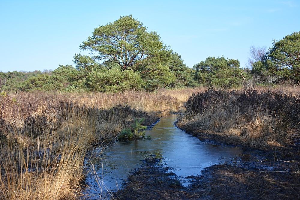paarse wandelroute Cartierheide bij Eersel