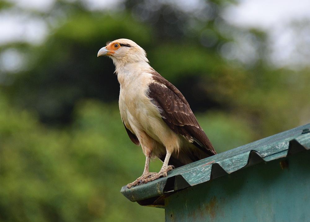 nationale parken van Costa Rica Corcovado11