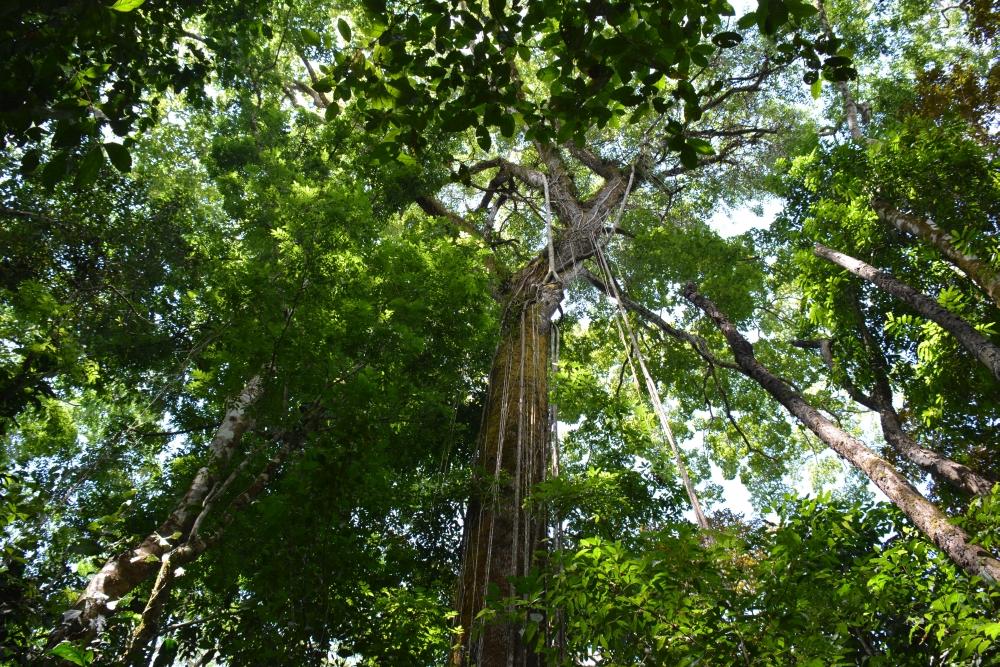 nationale parken van Costa Rica Corcovado5
