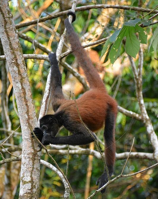 nationale parken van Costa Rica Corcovado6