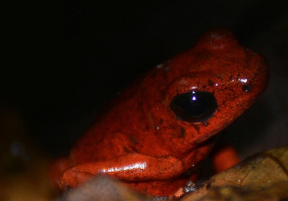 nationale parken van Costa Rica Gandoca Manzanillo1