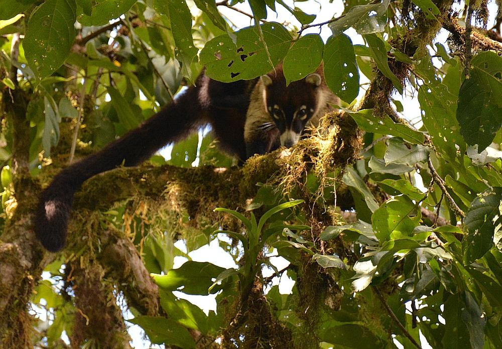 nationale parken van Costa Rica Monteverde4