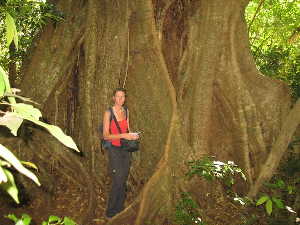 nationale parken van Costa Rica Monteverde5