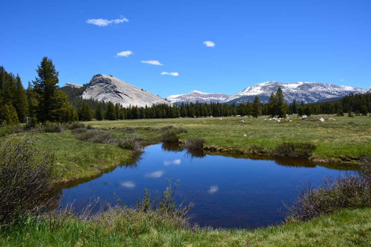 Yosemite National Park  Tolumne Meadows