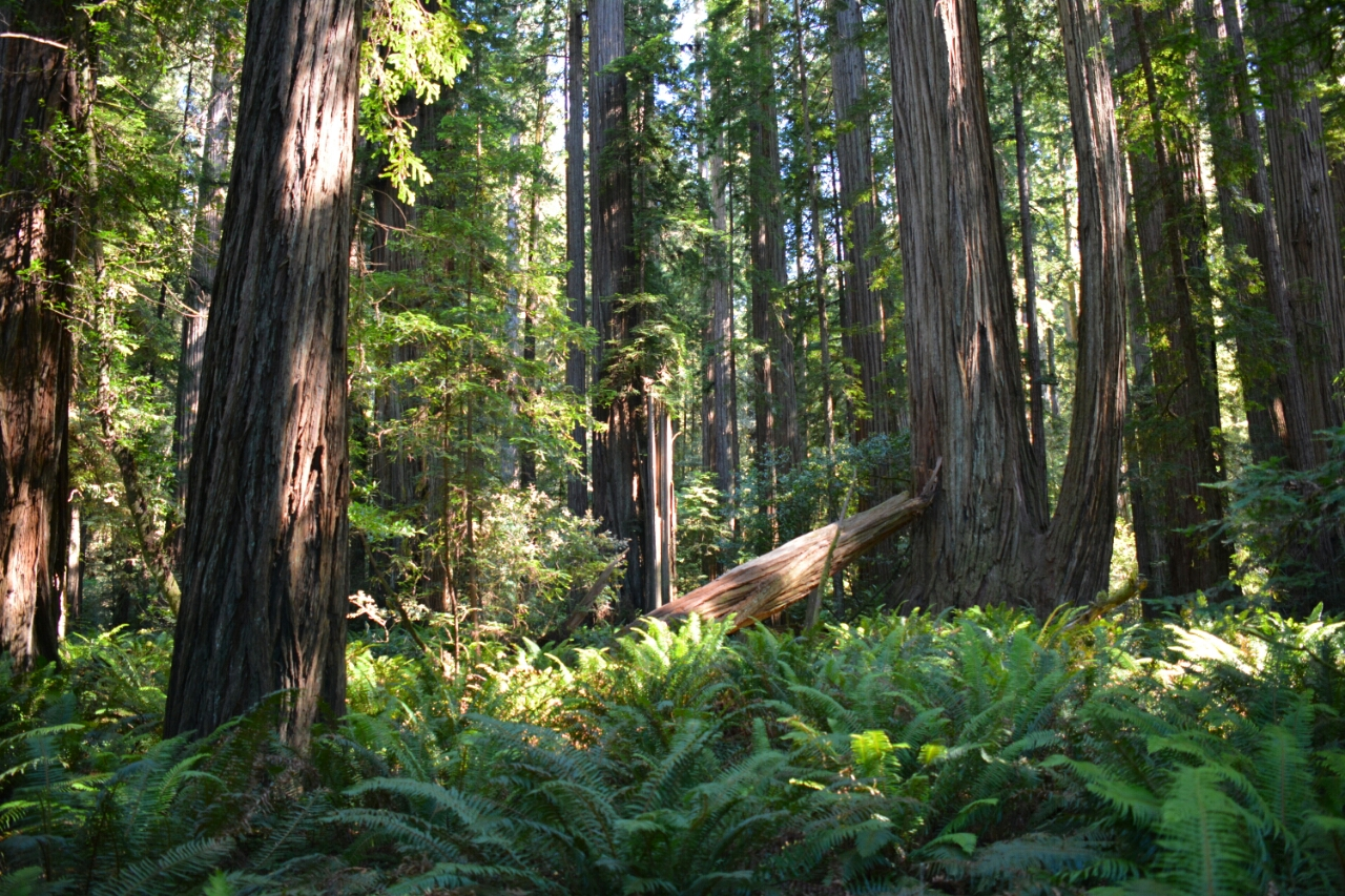 Stout Grove Californië