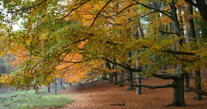 mooiste herfstwandelingen van Nederland