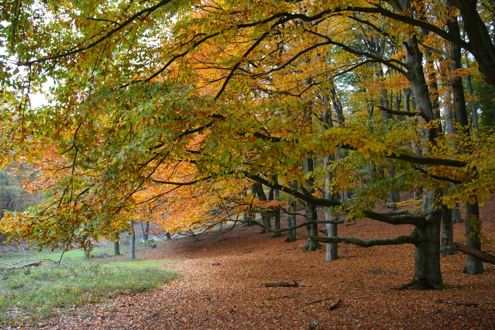 mooiste herfstwandelingen van Nederland Trage Tocht Rheden