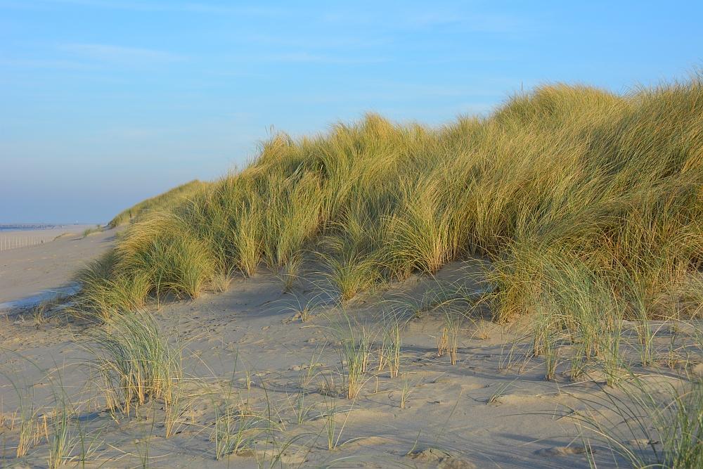 duinen Den Haag Kijkduin