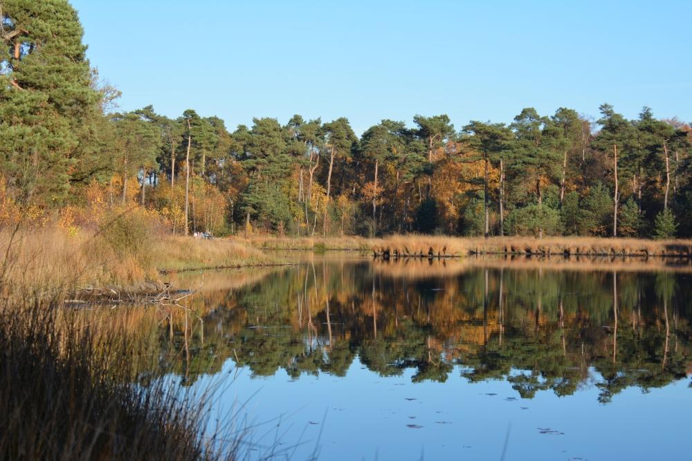 Oisterwijkse vennen herfst spiegeling in water