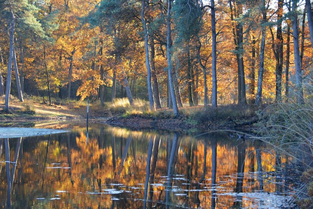 Sprookjesachtige sfeer herfstkleuren Oisterwijkse vennen