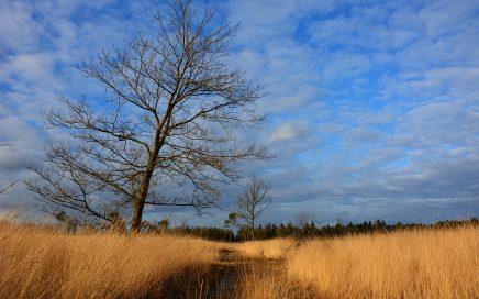 De mooiste de mooiste wandelgebieden in in Brabant