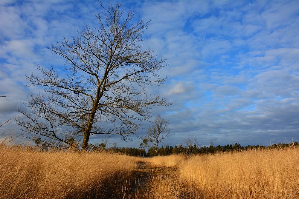 Wandelen in Brabant de grote en kleine cirkel bij Reusel