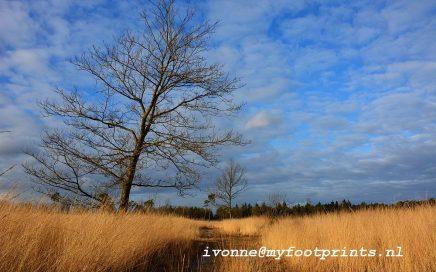 Bladel. blauwe lucht