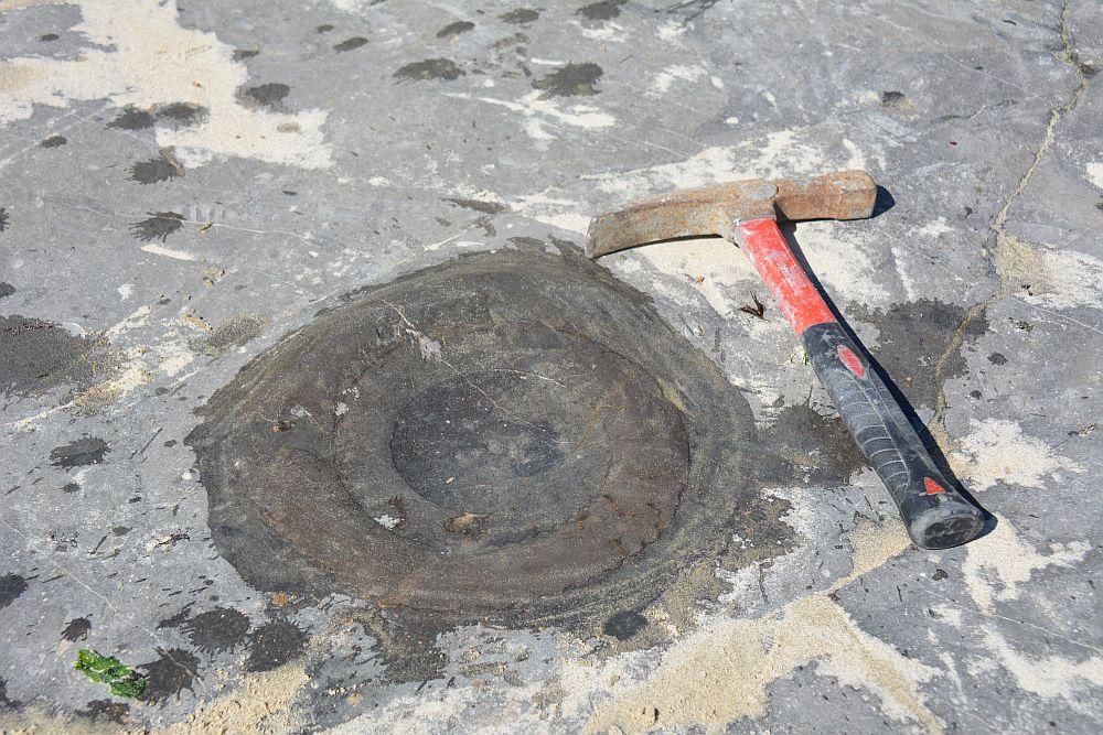 fossielen in zuid Engeland