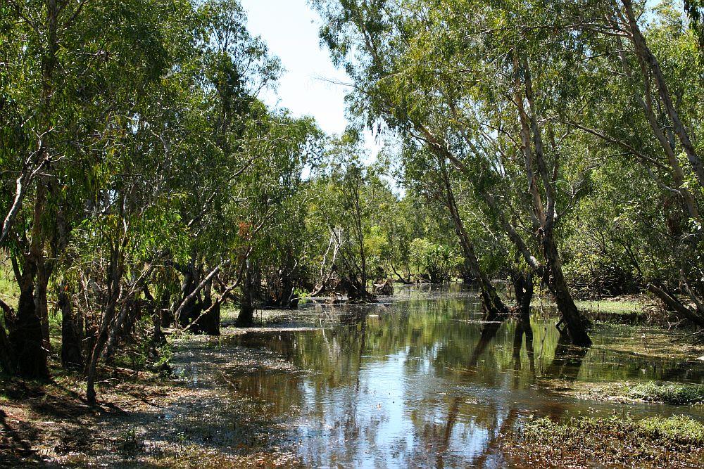 krokodillen-in-australië