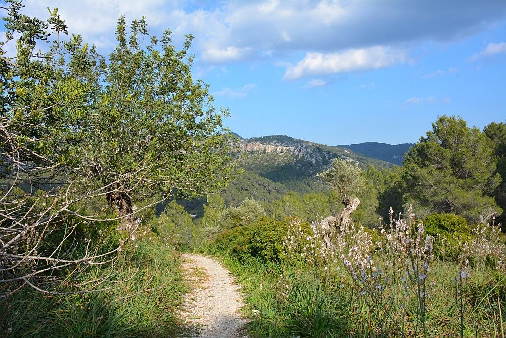 wandelvakantie in het voorjaar, Mallorca