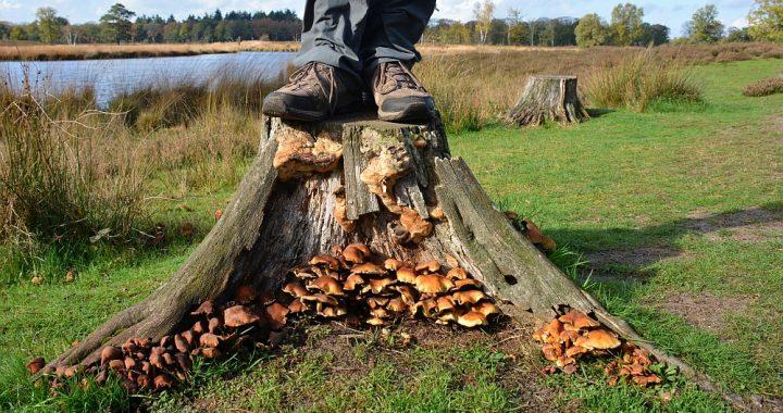 mooiste paddenstoelen Overasseltse en Hatertse Vennen paddenstoelen