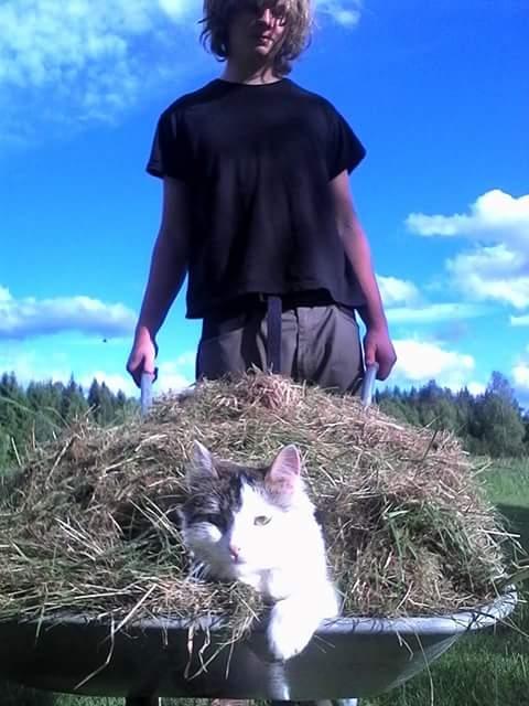 kat in hooi op kruiwagen