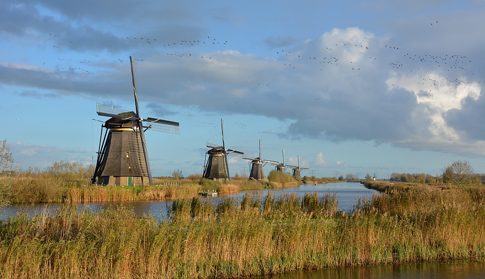 Visiting the windmills near Amsterdam; Kinderdijk