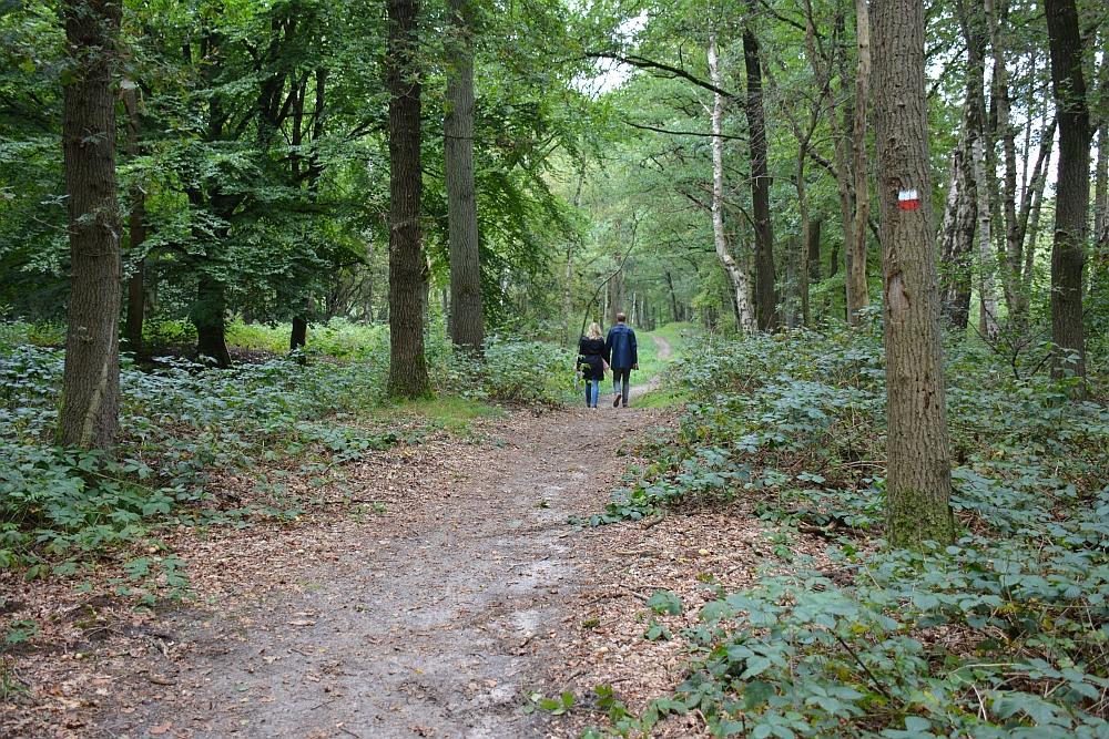 voetstappenpad bos bij Lage Vuursche