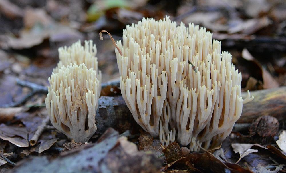 voetstappenpad paddenstoelen