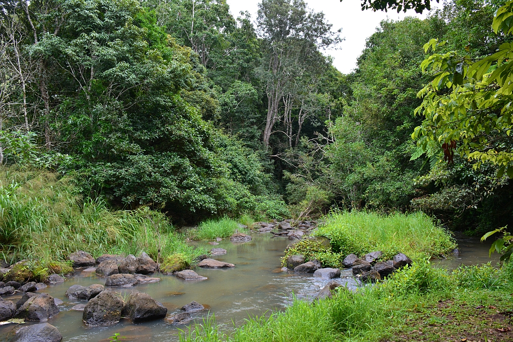 Atherton Tablelands Peterson Creek