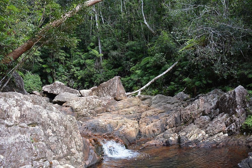 Paluma Range NP Australië