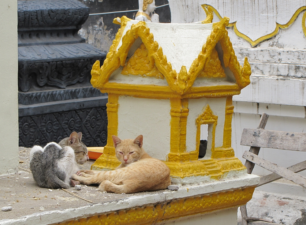 cats at Phnom Penh Temple