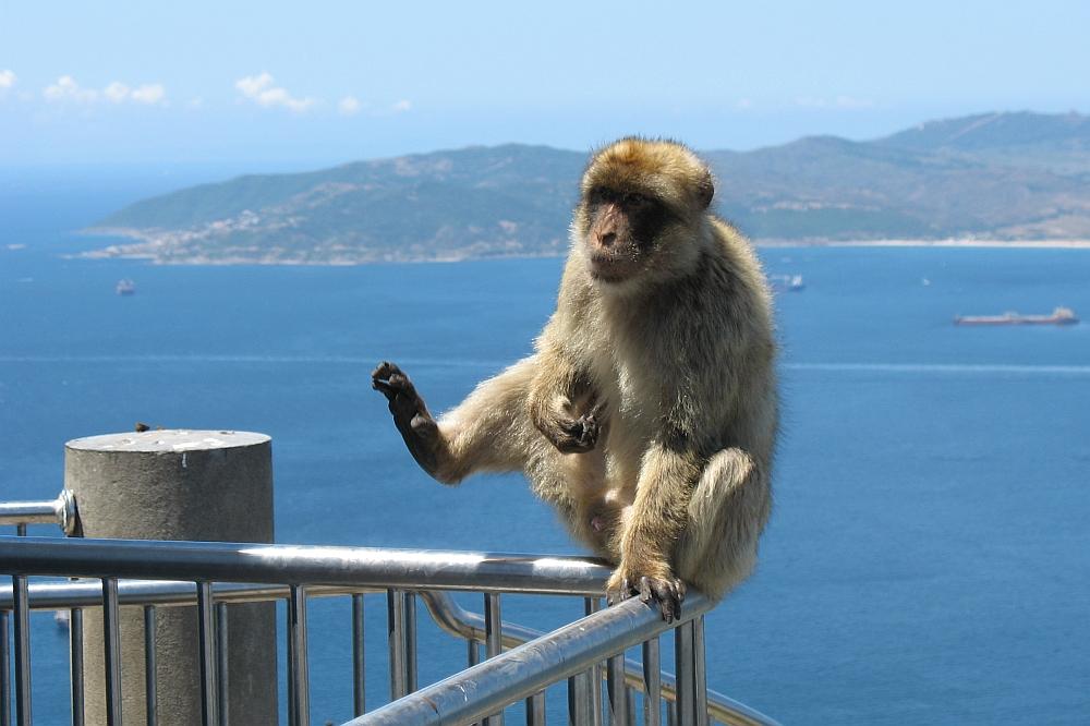 aap Gibraltar