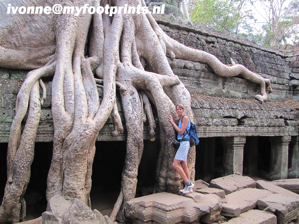 enormous jungle roots at Ta Prohm temple Cambodia