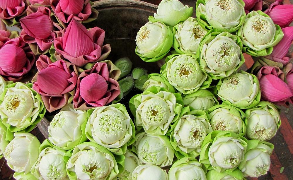 lotusbloemen tempel Cambodja