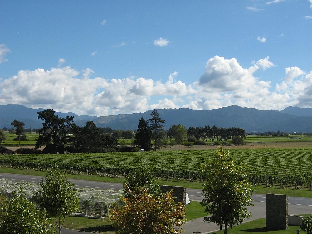 wijngaarden op het Zuidereiland van Nieuw Zeeland